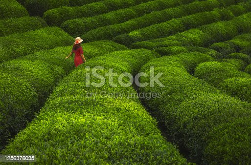 Rear view of young beautiful woman with red dress and hat having fun in the black tea plantation garden with lush fields of a terraced farm in Ceceva village, Çayeli, Rize, Karadeniz, Türkiye