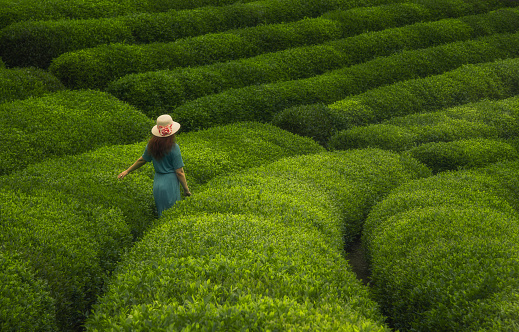 Young Woman Enjoying Tea Plantation In Cayeli Rize Black Sea Region In  Turkey Stock Photo - Download Image Now - iStock