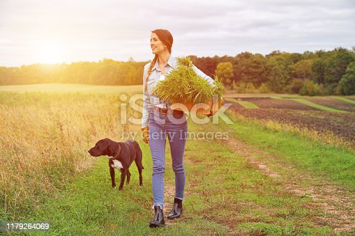 Young woman farmer harvesting cannabis buds