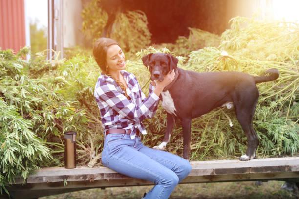 Junge Frau Bauer Ernte Hanf Pflanzen mit Haustier Hund – Foto