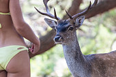 Young woman feeding a deer close up