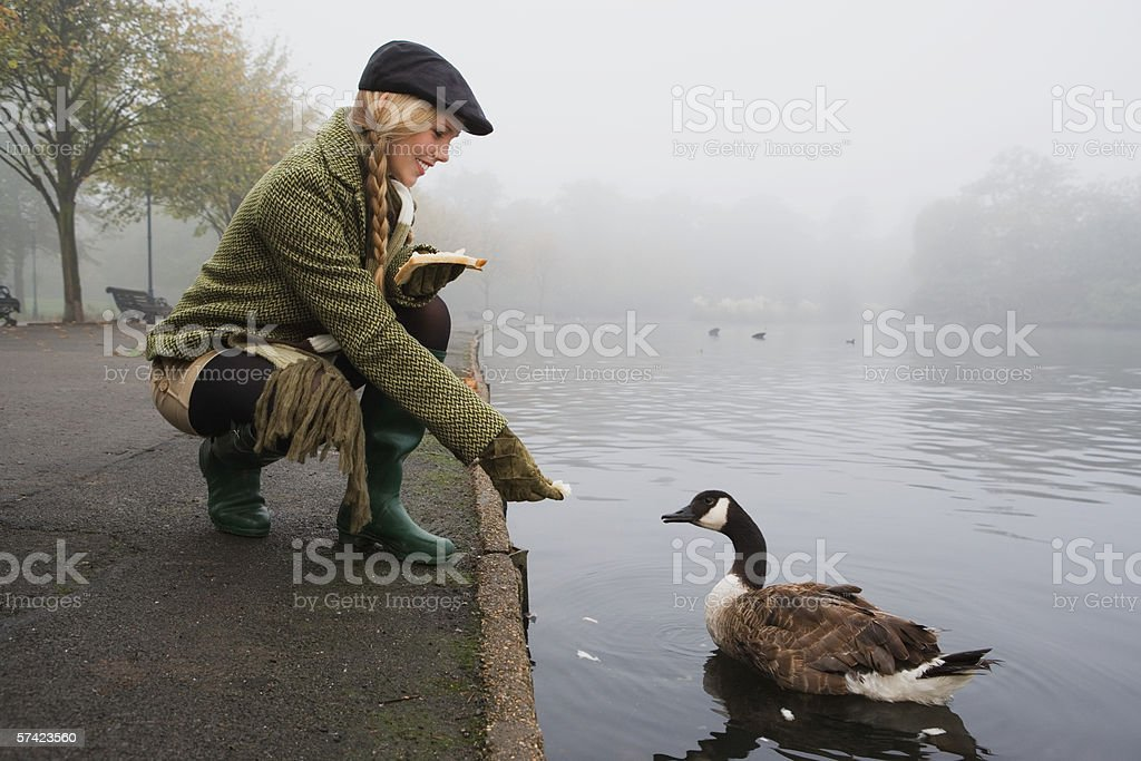 Young woman feeding goose in park stock photo