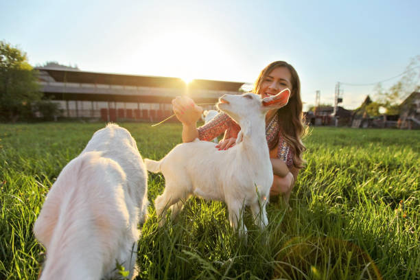 Young woman feeding grass to goat kids smiling wide angle photo with picture id1183325488?b=1&k=6&m=1183325488&s=612x612&w=0&h=i7c8ksvruc3wy hjleneo38vfp0nehqx3jvfb64v4eu=