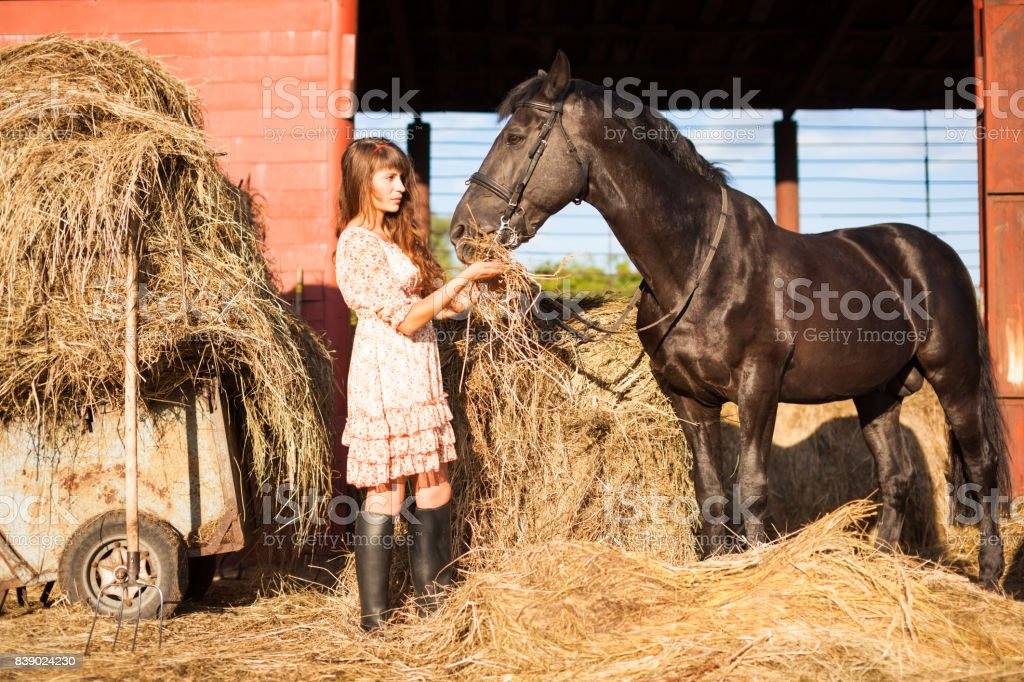 young woman feeding her horse stock photo