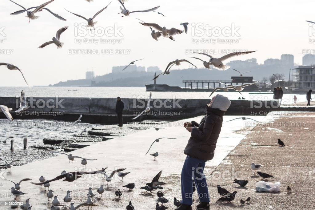 Odessa, Ukraine - Jan 15, 2018: A young woman, feeds numerous gulls on a  beach by the sea on a winter sunny day. stock photo