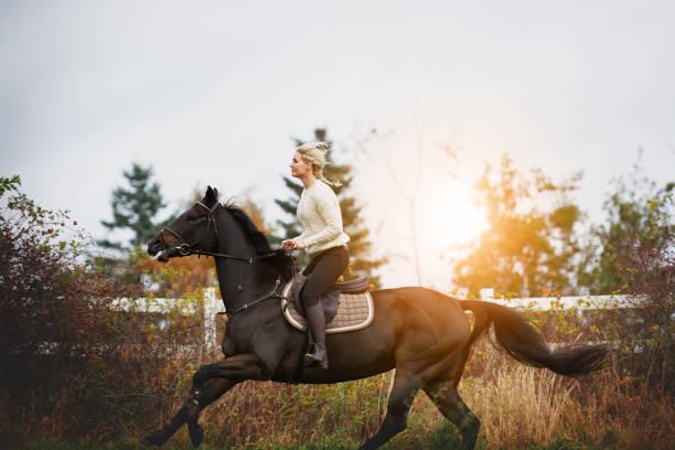 秋のフィールドを介して彼女の馬を疾走する若い女性 - 乗馬 ストックフォトと画像