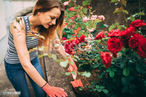 Smiling casual dressed woman gardening and taking care of flowers in the backyard on a sunny spring day