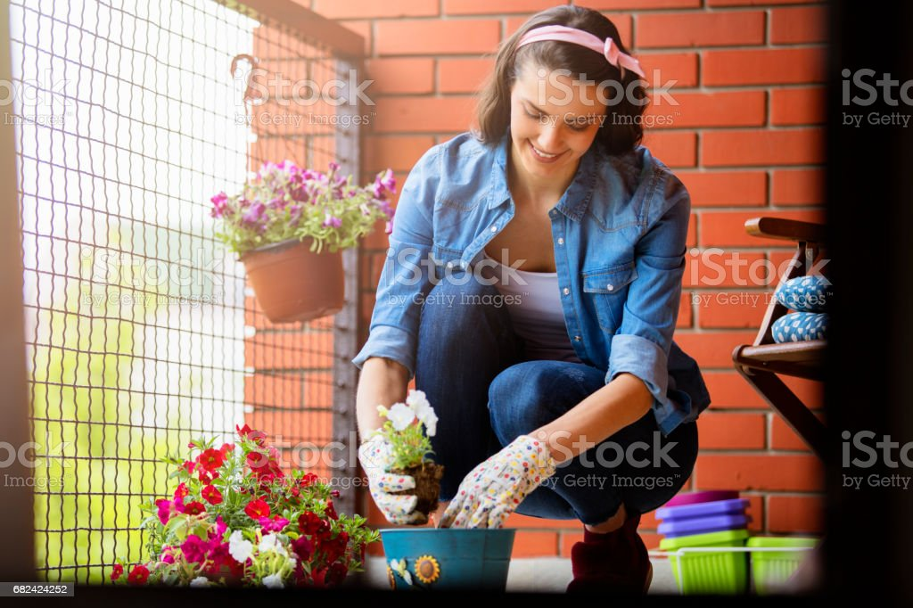 Young woman gardening on terrace royalty-free stock photo