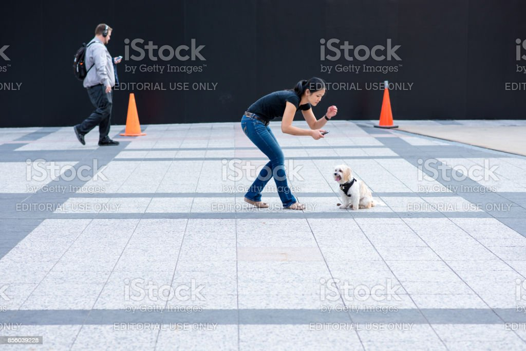 Young woman getting her dog to sit for a photo downtown Chicago stock photo