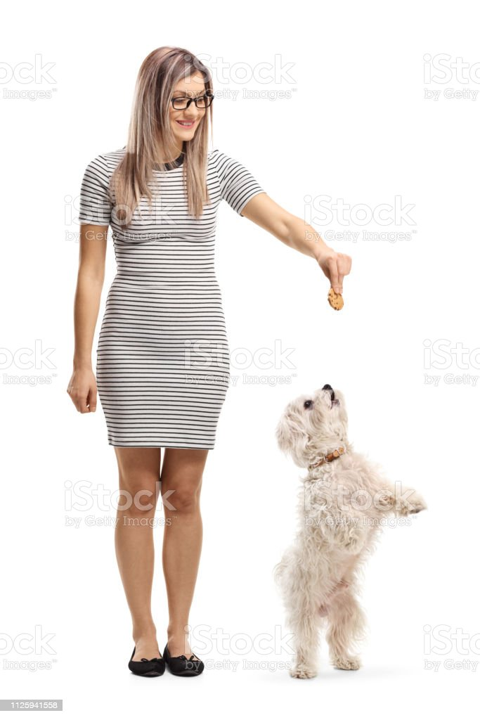 malteser pudel hund