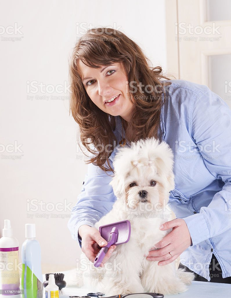 Young woman grooming a small dog stock photo