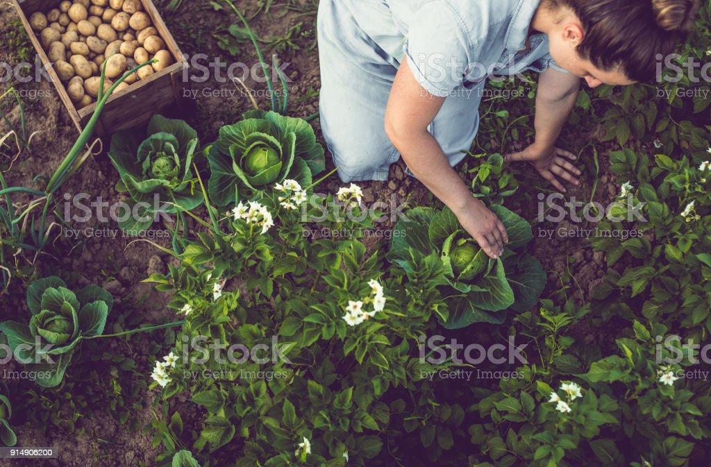 Junge Frau, die Ernte nach Hause angebauten Salat – Foto