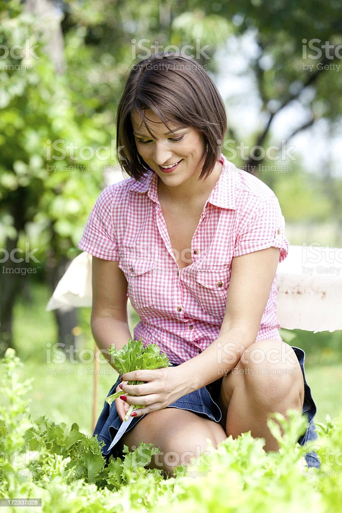 Young woman harvesting lettuce royalty-free stock photo