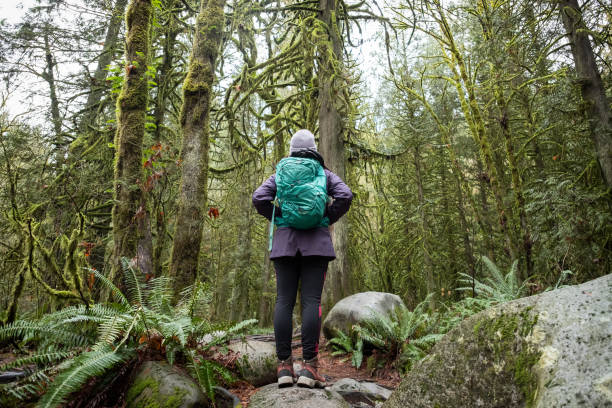 young woman hiker gazing at moss and lichen covered trees - forest bathing foto e immagini stock