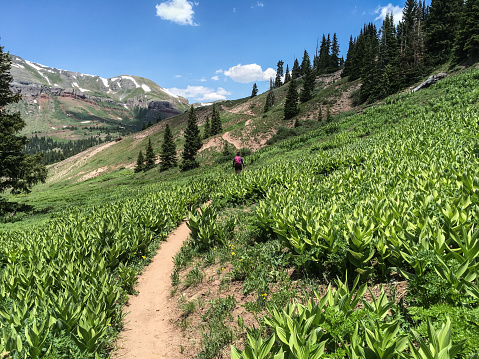 Young Woman Hiker on the Colorado Trail