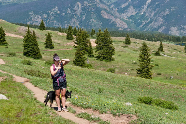 Young Woman Hiker Taking a Picture With Her Smart Phone A young woman hiker takes a picture with her smart phone while hiking the Colorado Trail in the San Juan National Forest, Colorado, USA. san juan county colorado stock pictures, royalty-free photos & images