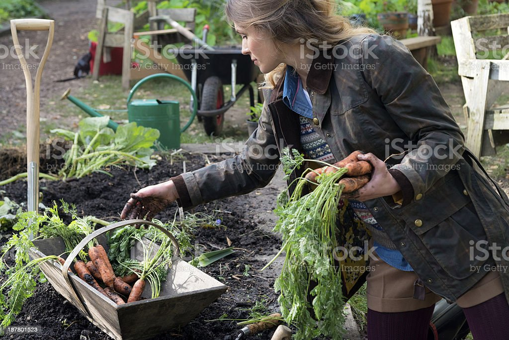 Young Woman Holding Carrots In Urban City Garden stock photo