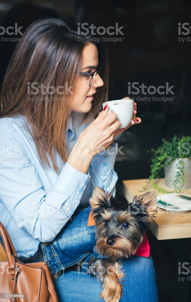 Young woman holding cute Yorkshire terrier in pet friendly cafe.