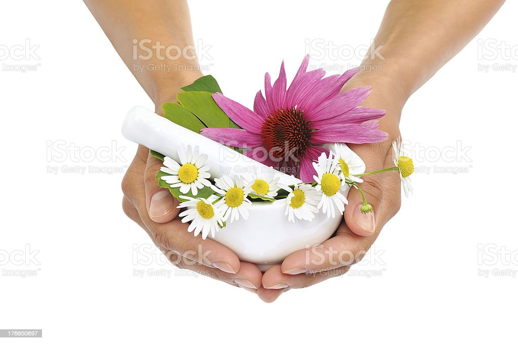 Young  woman holding mortar with herbs – Echinacea, ginkgo, chamomile royalty-free stock photo