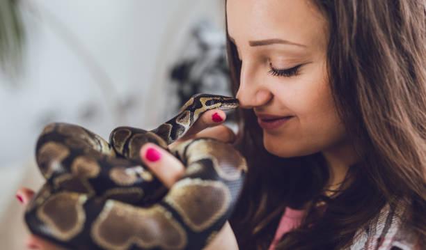 serpent de tenue de jeune femme - serpent photos et images de collection