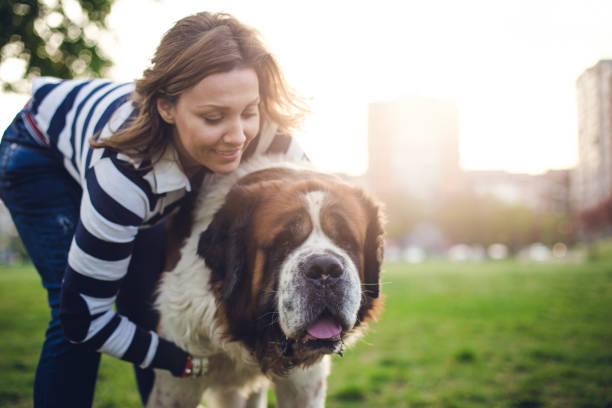 junge frau umarmen ihr hund - bernhardiner stock-fotos und bilder