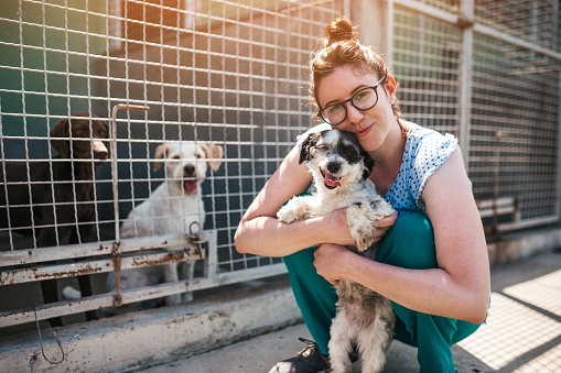 Young adult woman working and playing with dogs in animal shelter