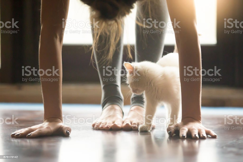 Young woman in Ardha uttanasana pose, home interior, close up stock photo