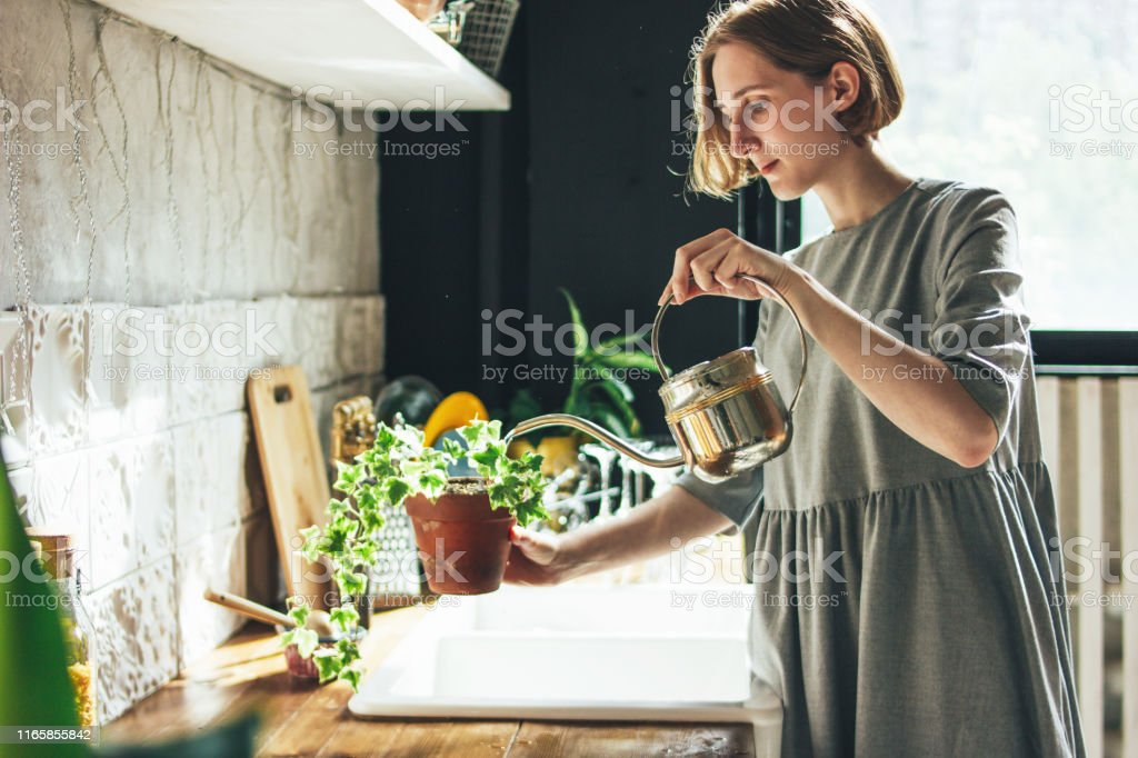 Young woman in grey dress sprays water on houseplant in the kitchen,...