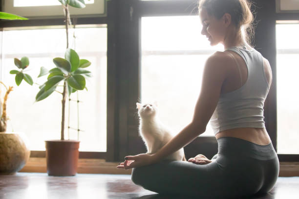 young woman in half lotus pose at home, cat near - lustiges yoga stock-fotos und bilder