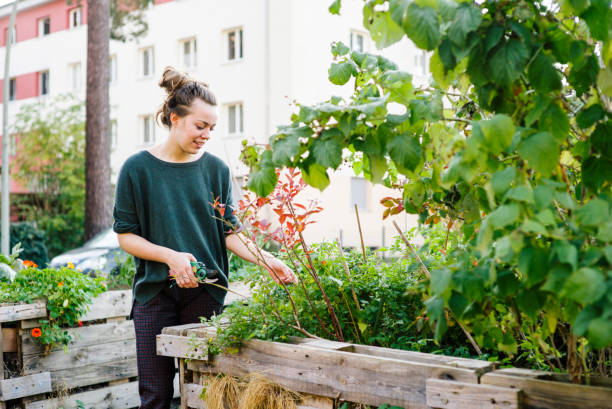 young woman in organic urban gardening project at raised bed - living a sustainable lifestyle stock pictures, royalty-free photos & images
