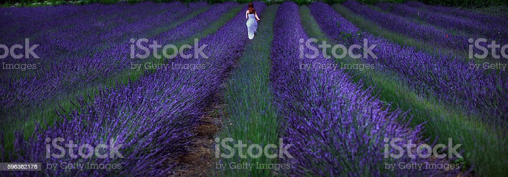 Young woman in the lavander field royalty-free stock photo