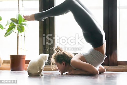 istock Young woman in variation of vrischikasana pose, home, cat near 639191848