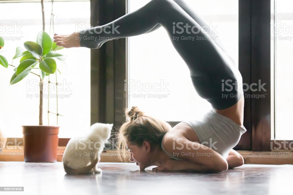 Young woman in variation of vrischikasana pose, home, cat near stock photo