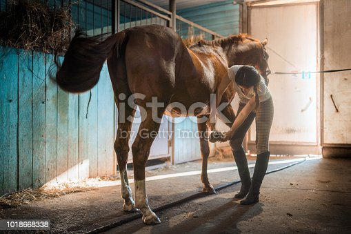 Young beautiful woman with long hair dressed in a T-shirt and a equetech checkered breeches. The owner woman is grooming and brushing her horse (a stallion with brown color coat). She is cleaning the horse's hoof with a stiff brush. Shooting in the stable