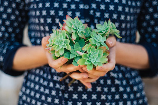 Young woman is holding succulent branches