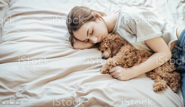 Young woman is lying and sleeping with poodle dog in bed picture id672768140?b=1&k=6&m=672768140&s=612x612&h=mp91xyc7db8mj h7mtg3 rwhhrtjtsmwf25ulu vg4s=