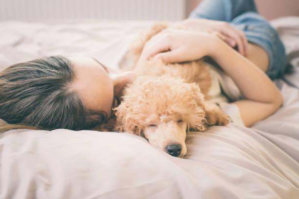 jeune femme est allongé et dormir avec chien caniche dans son lit. - femme seule s'enlacer photos et images de collection