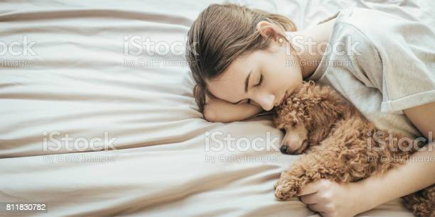 Young woman is lying and sleeping with poodle dog in bed picture id811830782?b=1&k=6&m=811830782&s=612x612&h=ohha3llkhjggbaodwyhmzjsxuh1oqytscnptamkzrl0=