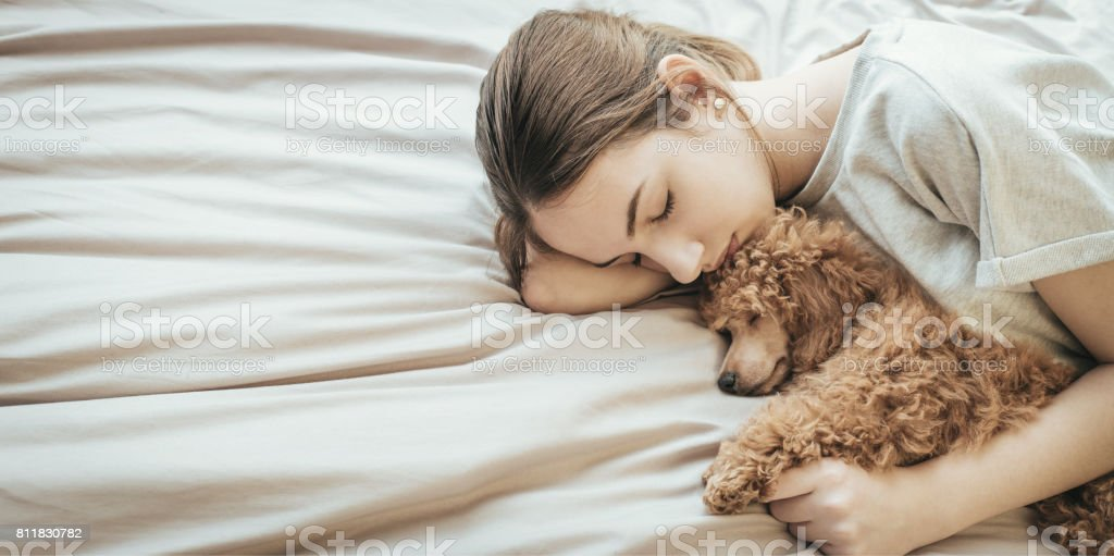 Young woman is lying and sleeping with poodle dog in bed. stock photo