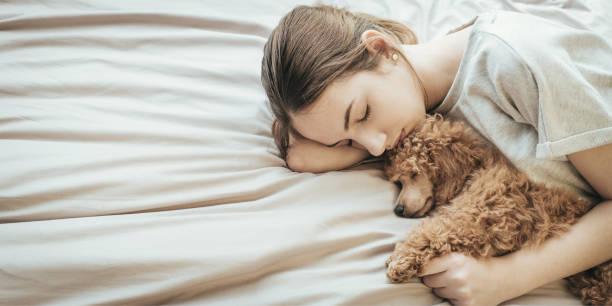 若い女性が横になっているとプードル犬のベッドで眠っています。 ストックフォト