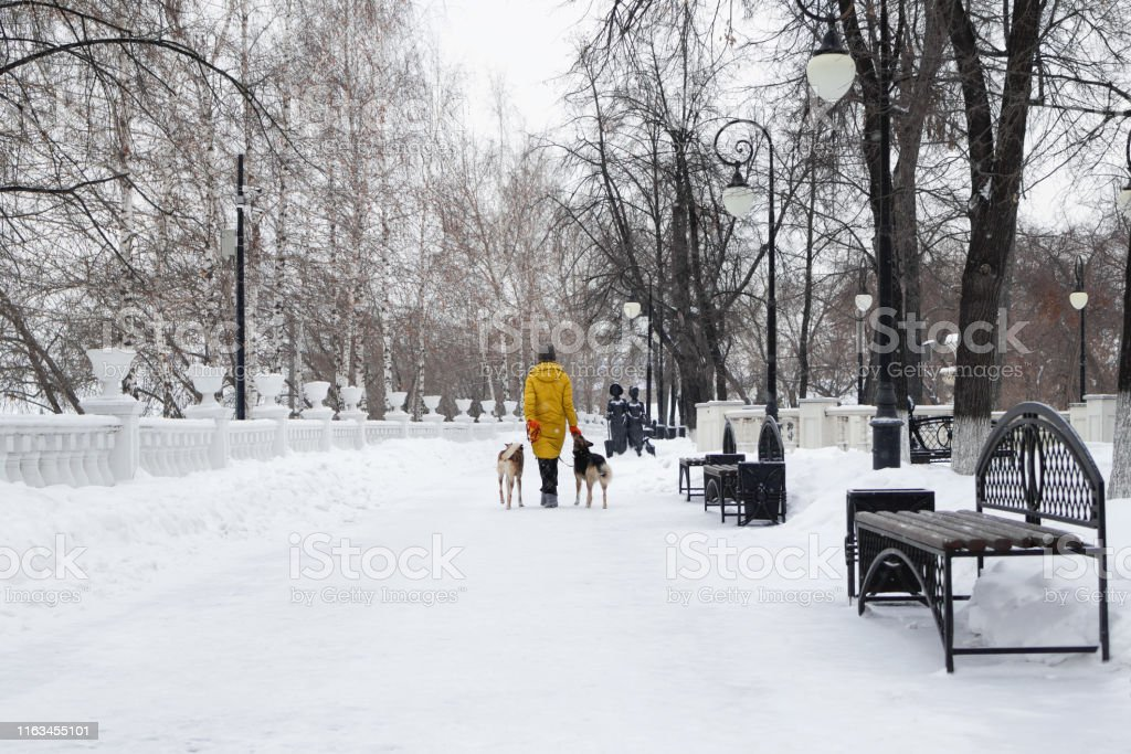 Young woman is walking in a snowy winter park with her two dogs. Back...