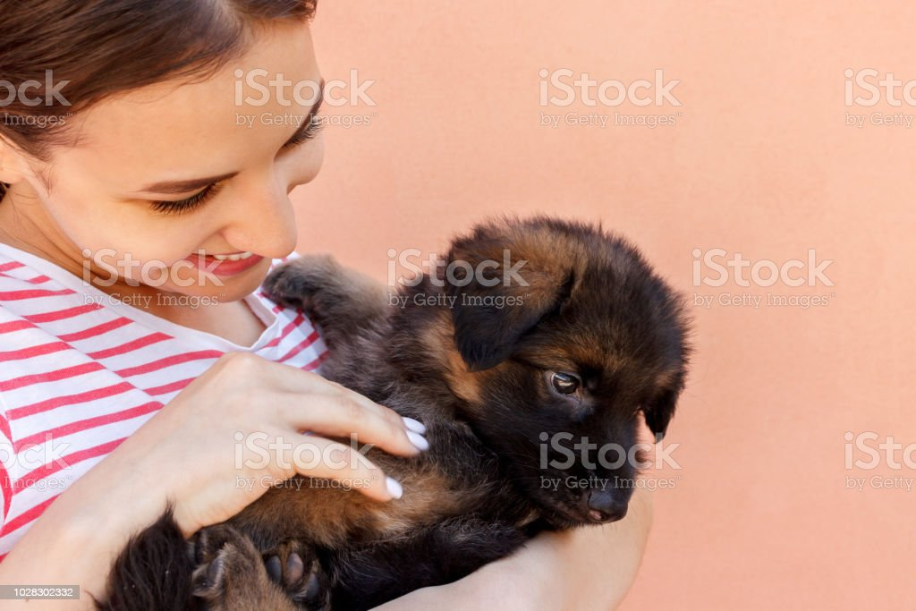 Young Woman Keeping Black German Shepherd Puppy Near Her Face Stock