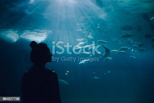 Silhouette of a young woman watching fish in a large aquarium.