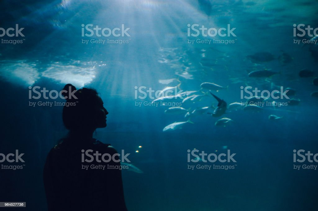 Young woman looking at fish in the aquarium stock photo