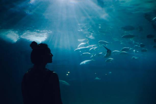 young woman looking at fish in the aquarium - zoo struttura con animali in cattività foto e immagini stock