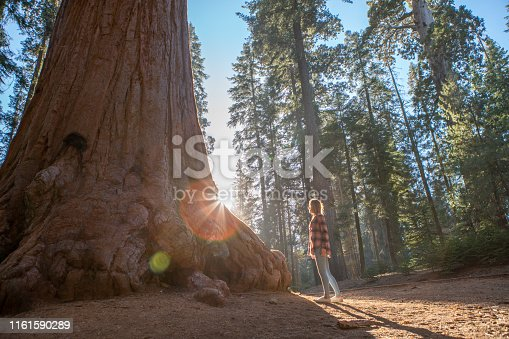 Young woman looking up giant Sequoia trees in forest