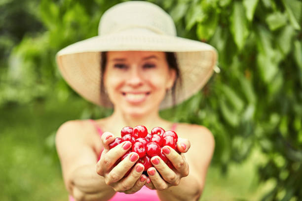 Young woman picking cherry berries from tree stock photo
