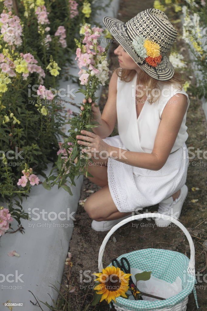 Young woman picking flowers at a farm. Gardener. stock photo