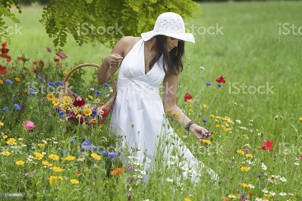 Young woman picking flowers on blooming meadow stock photo
