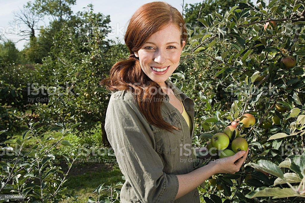 Jeune femme cueillir des pommes - Photo
